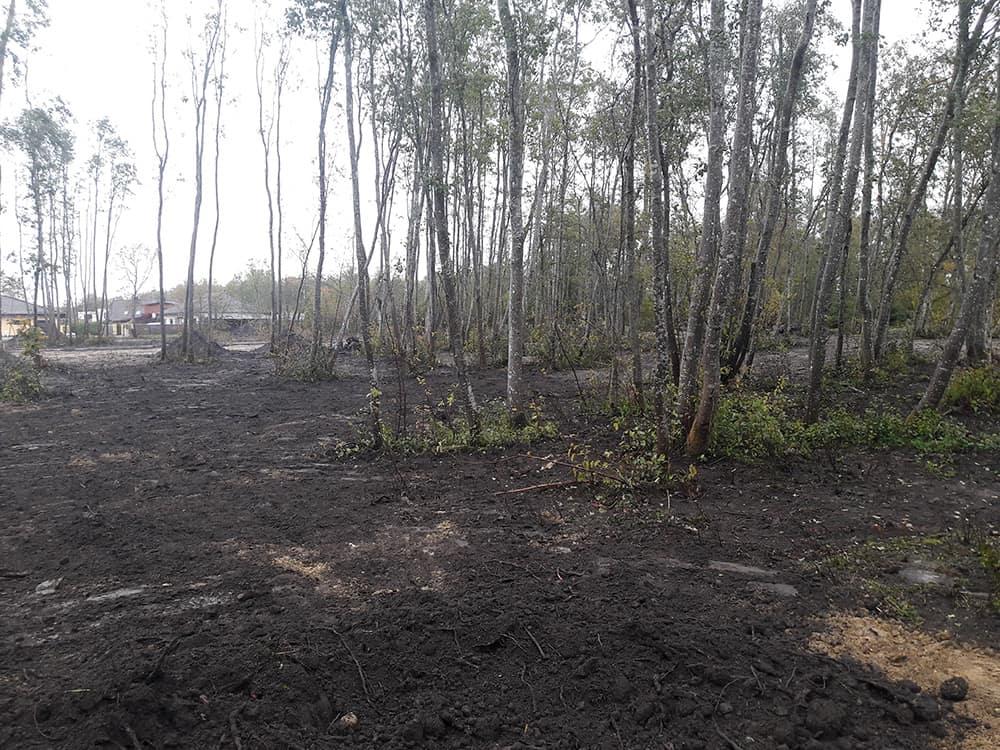 Metsamaast haritavaks maapinnaks